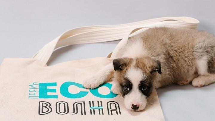 Научат шить экосумки и сортировать отходы: в Перми пройдет фестиваль «Эко-волна»