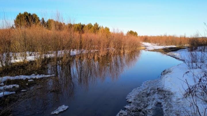 Всю неделю в Красноярске будут плюсовая температура и дожди