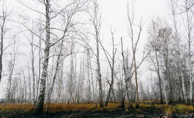 В Крутинском районе загорелись торфяники