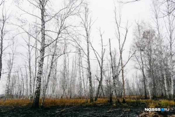 В лесном хозяйстве следят, чтобы пожар не перекинулся на лес
