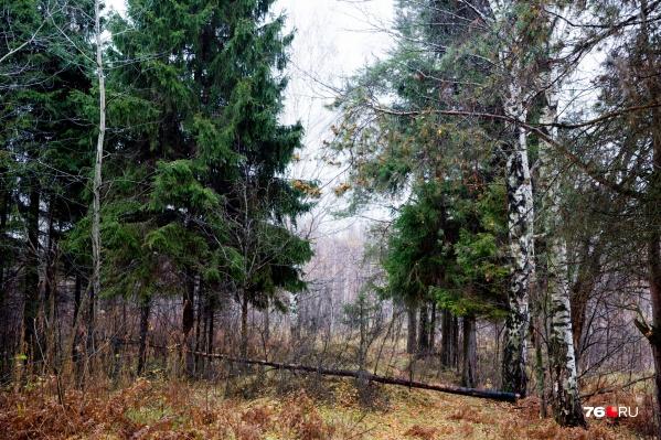 Тело нашли в лесу
