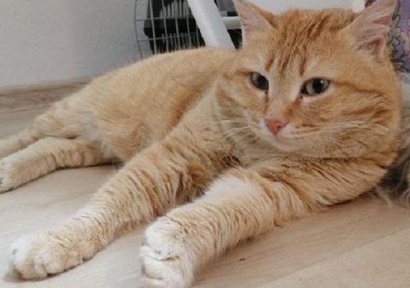 Зоозащитники написали заявление на учительницу, которая усыпила кота с передержки
