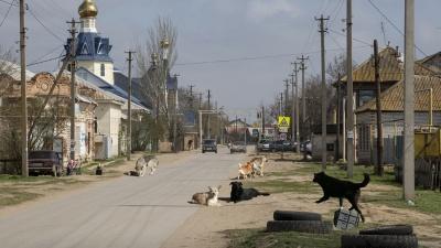 «Нужно, чтобы человека совсем загрызли?»: приют для бездомных собак терроризирует поселок под Волгоградом