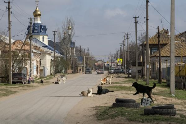 Собаки из приюта фактически захватили село и дачное общество