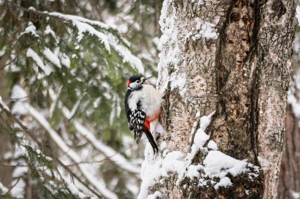 Самыми холодными днями в Красноярске станут вторник и среда
