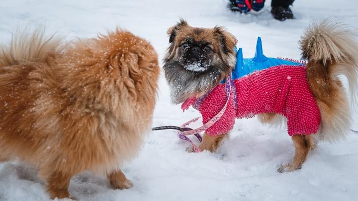 Синоптики Кузбасса рассказали о погоде на неделе. Она будет часто меняться