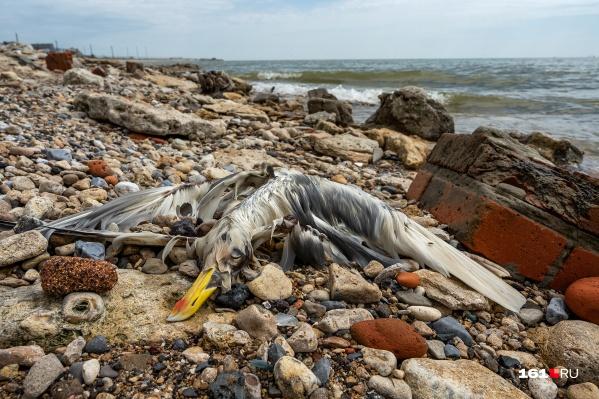 На побережье лежат тела птиц и рыб