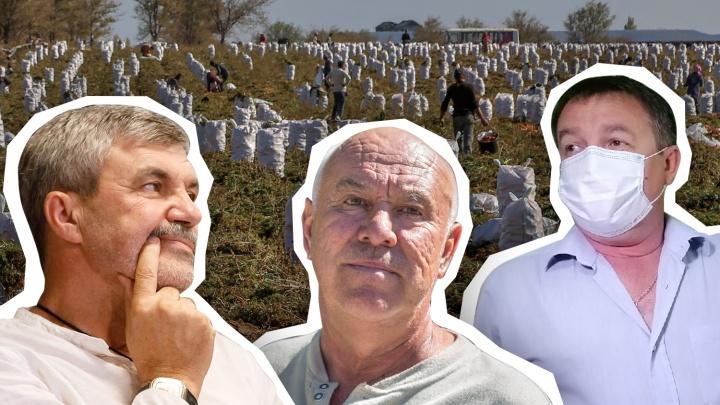 «Виноваты Ельцин, пандемия и поколение лентяев»: в Волгограде и области оказалось некому убирать урожай