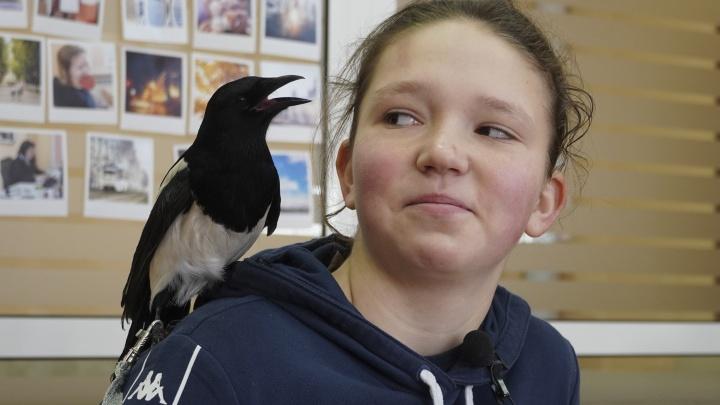 «Вырвали у кошки из пасти»: девушка из Ярославля спасла и приютила птенчика сороки