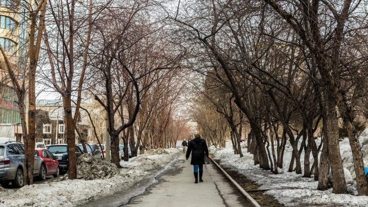 Новосибирскую область ждет аномальное тепло