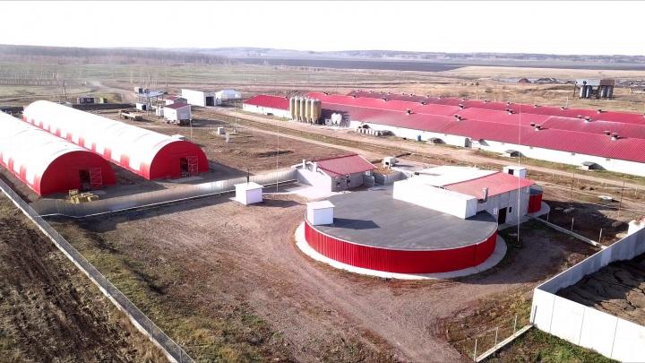 «Это достояние Красноярского края»: холдинг Goldman Group построил биогазовую станцию