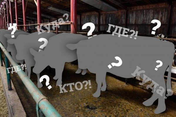 Детективная история о пропаже тюменских коров пополнит коллекцию мировых загадок
