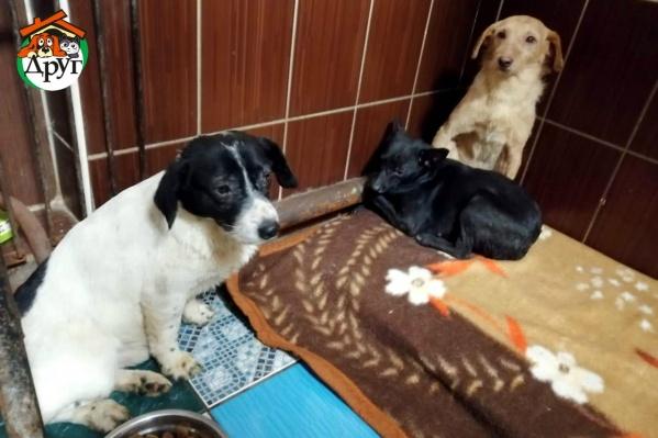 Сейчас животные находятся в приютах «У Виктории» и «Теремок»