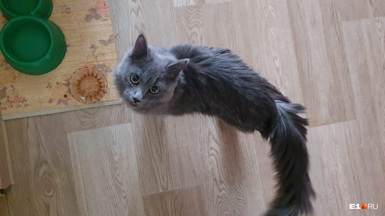 Кошка оказалась очень ласковой