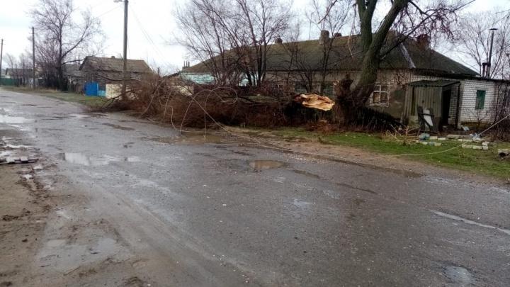 Дерево упало на провода: в поселке Волгограда несколько домов остались без электричества