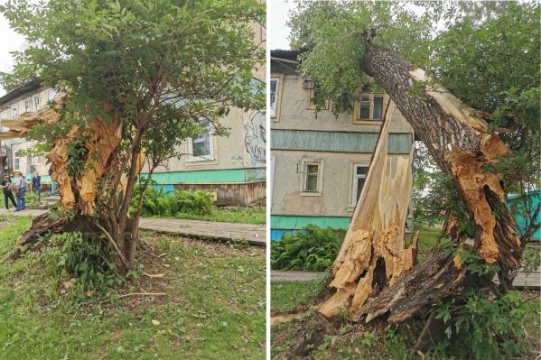 Дерево обещают убрать уже вечером
