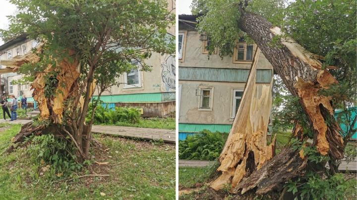 «Услышали треск и грохот»: в Архангельске на дом упал тополь