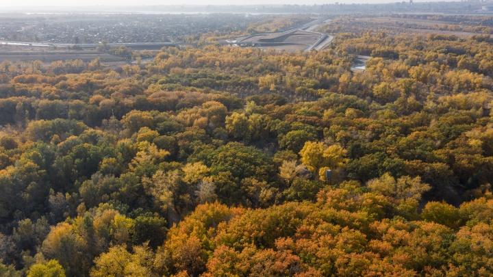 Делать там нечего: в Волгоградской области до конца лета запретили лесные прогулки