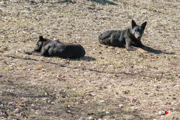 Собак стерилизуют и чипируют