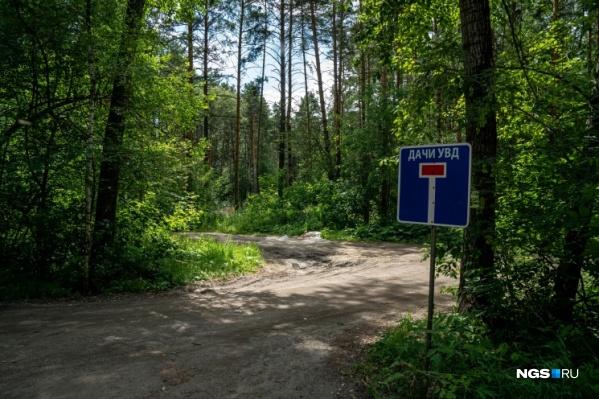 ООПТ «Заельцовский бор» планируют открыть в следующем году