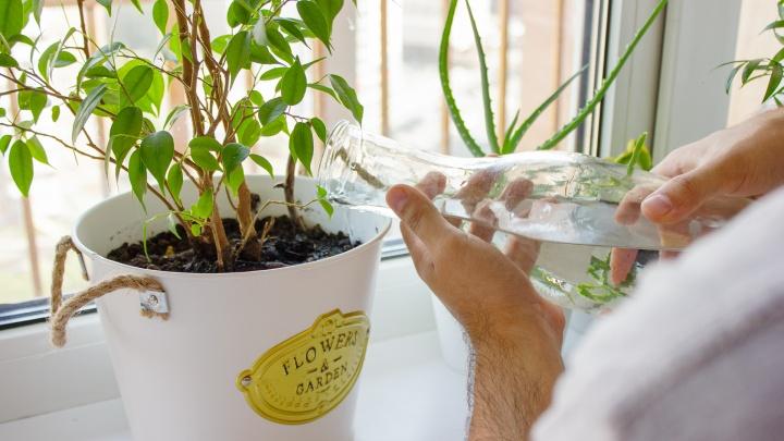 Как правильно поливать комнатные растения: 5 советов