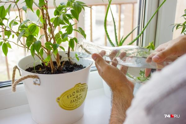 Избыток воды губителен для растений. Впрочем, как и ее недостаток