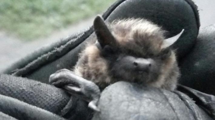 Под Котласом в погребе нашли летучую мышь. Как поступить, чтобы не навредить ей и себе