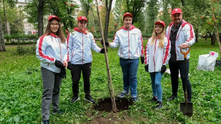 Деревья по осени считают: в саду Миндовского высадили рябиновую аллею