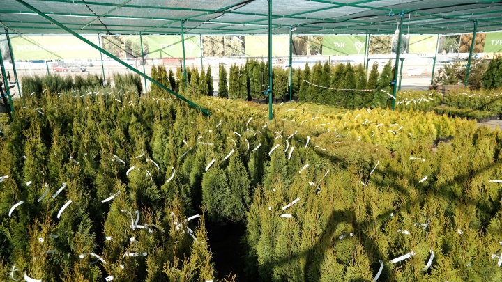 В садовых центрах «Исаковский» открыли летние площадки иобъявили скидку 10% навсё доконца апреля