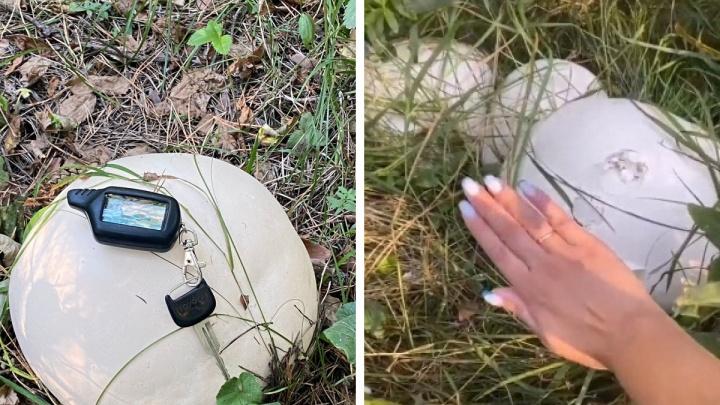 «Как будто яйца дракона»: сибирячка нашла поляну с огромными грибами