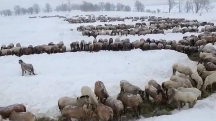 В Башкирии 1000 лошадей построились в надпись «8 Марта»