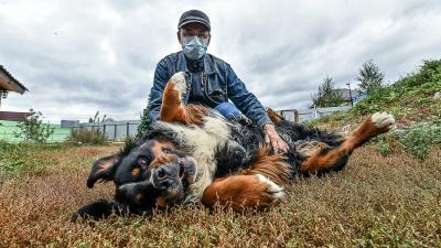 «Купили щенка за 60 тысяч, а потом бросили». Как уралец спасает огромных породистых собак