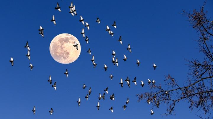 «Всему виной ретроградный Меркурий»: гороскоп на октябрь для всех знаков зодиака