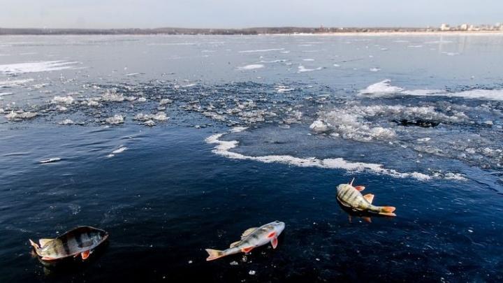 «В голос орала, что ей туда позарез нужно»: журналист 74.RU— о том, как водители убивают берег Шершней