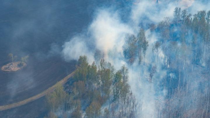 Омские власти предложили ввести вознаграждение за информацию о поджигателях лесов