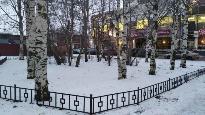 Музей вместо деревьев: в Архангельске планируют вырубить березовый сквер ради фондохранилища