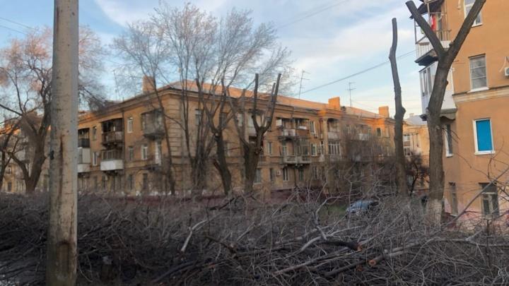 Прощайте, красивые наши: в Волгограде коммунальщики подчистую срубили четыре десятка деревьев