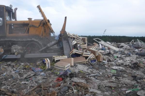 В Зауралье уничтожат на полигоне очередную партию фруктов без документов