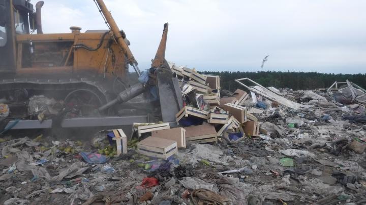 В Курганской области уничтожат 1,3 тонны груш без маркировки