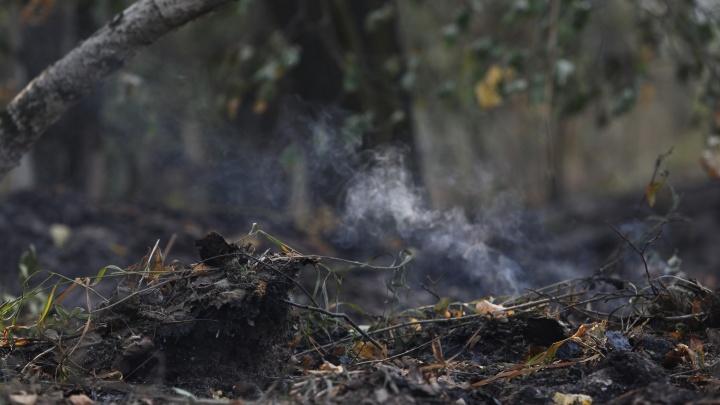 Под Первоуральском спасатели остановили мощный пожар, из-за которого эвакуировали сады и санаторий