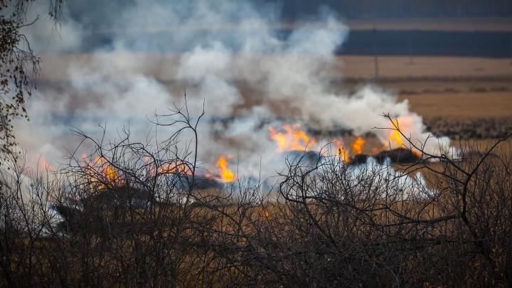В Югре бушует 5 природных пожаров. Впервые с начала пожароопасного сезона горит 1200 гектаров леса