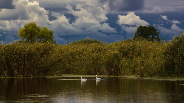 Здесь поселилась целая семья: фотограф показала один день из жизни стайки лебедей в Волгоградской области