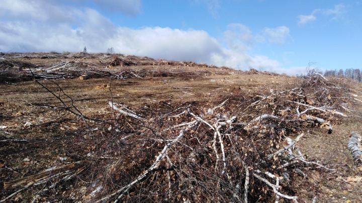 В Башкирии недалеко от Иремеля вырубают лес. Прокуратура проводит проверку