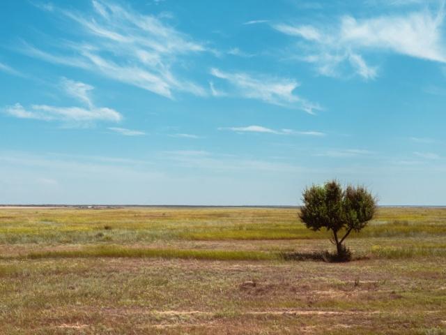 Аграрии Зауралья получат миллиард рублей. Это поможет предприятиям, которые пострадали от засухи