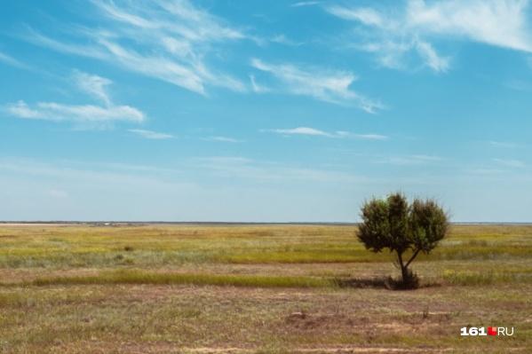Засуха нанесла ущерб аграриям в половине районов Зауралья