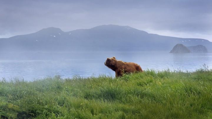 «Медведи тут хозяева, ты гость». Потрясающие виды Камчатки, от которых захватывает дух