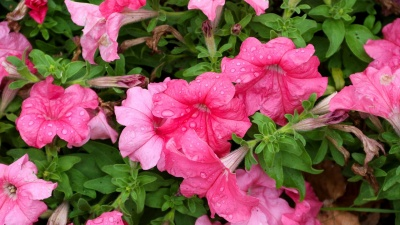 Соседям на зависть: пять лучших вариантов многолетних цветов, которые можно посадить осенью