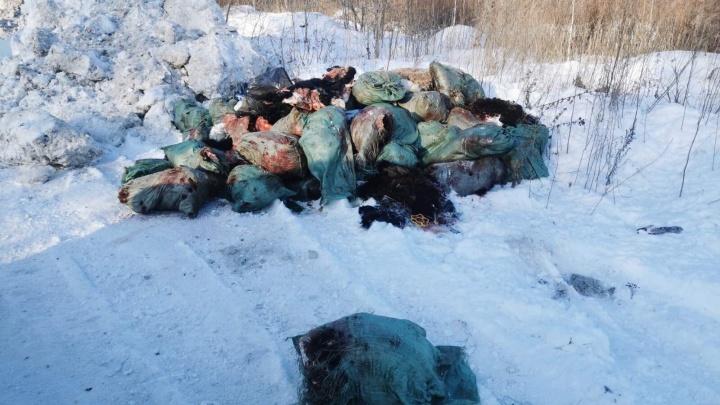 Останки убитых животных нашли прохожие на берегу реки в Тюмени