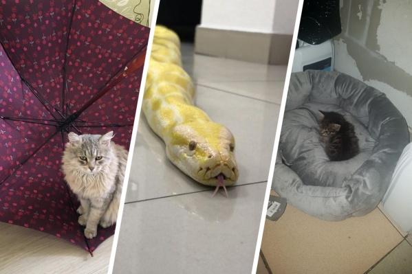 Котики попадают на рабочее место по разным причинам