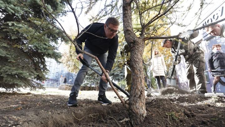 В центре Челябинска высадили даурские лиственницы взамен уничтоженных столетних деревьев